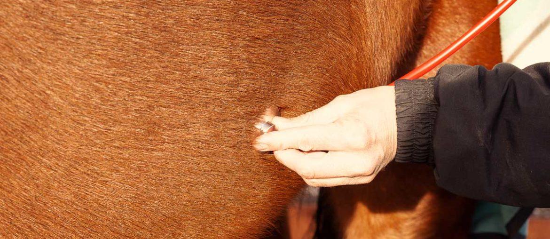 Pferd mit Kolik schnell helfen