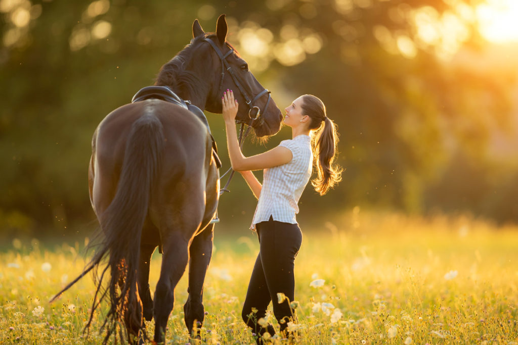 Erste Hilfe belm Pferd