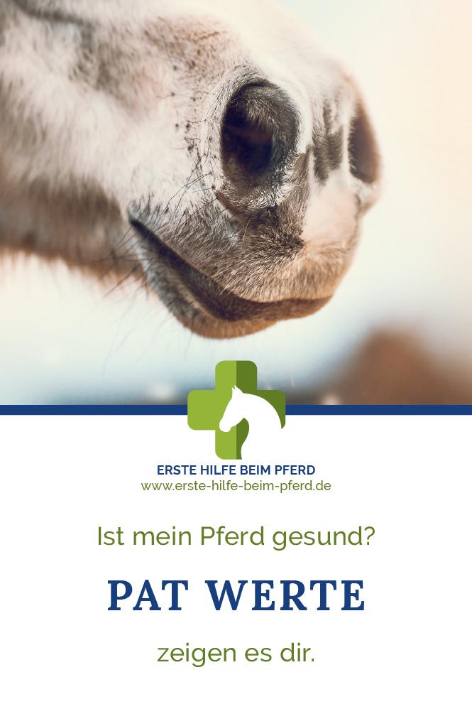 Ob dein Pferd gesund ist, zeigen dir die PAT Werte beim Pferd.
