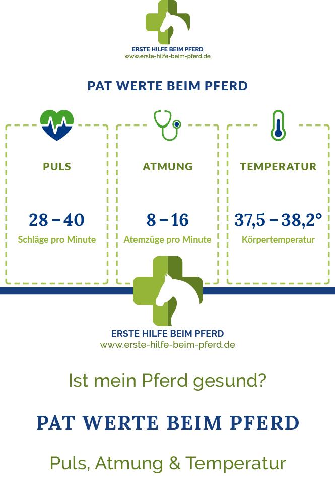 Puls, Atmung und Temperatur beim Pferd
