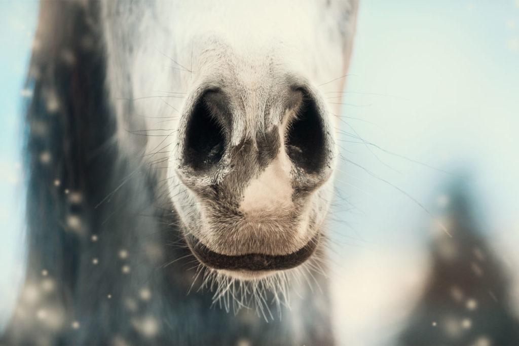 PAT Werte beim Pferd