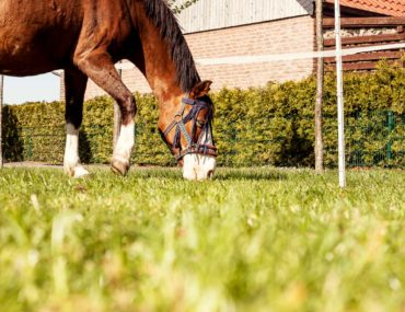 Anweiden oder Angrasen beim Pferd ist mit diesen Tipps leicht, schnell und dein Pferd bleibt gesund!