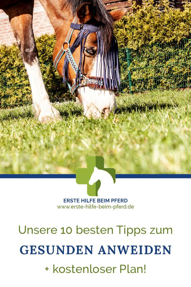 Anweiden beim Pferd: ganz einfach mit diesen Tipps!