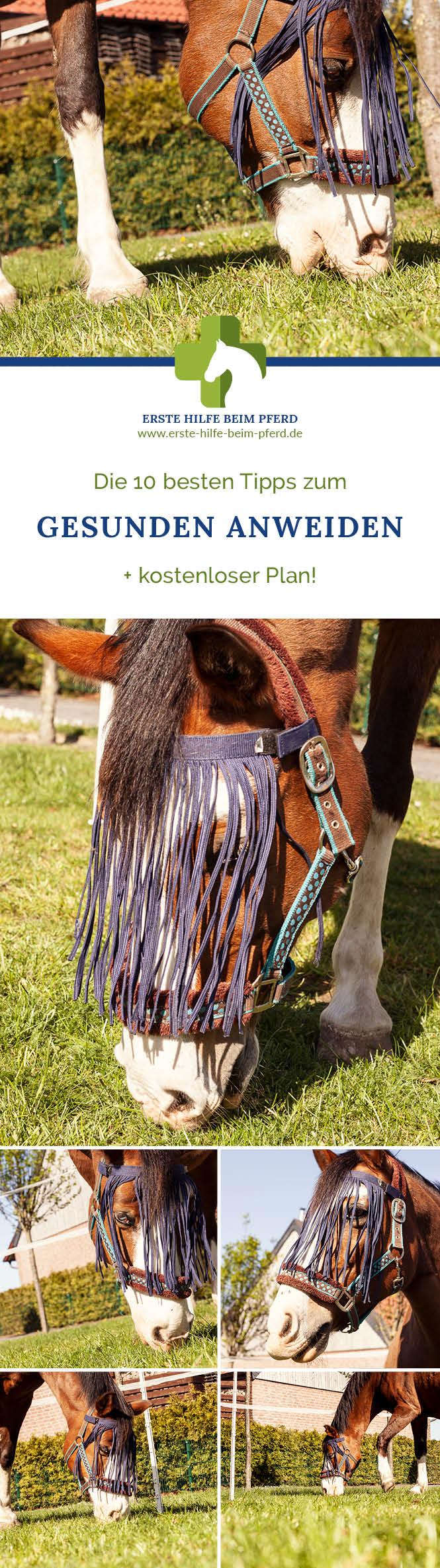 Tipps zum Anweiden von Pferden.