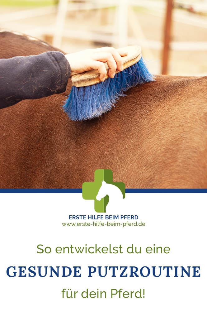 Pferd putzen für die Gesundheit