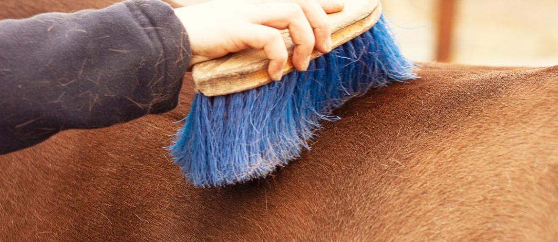 Das Putzes des Pferdes