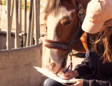 Alles auf einen Blick: Gesundheitstagebuch für Pferde.