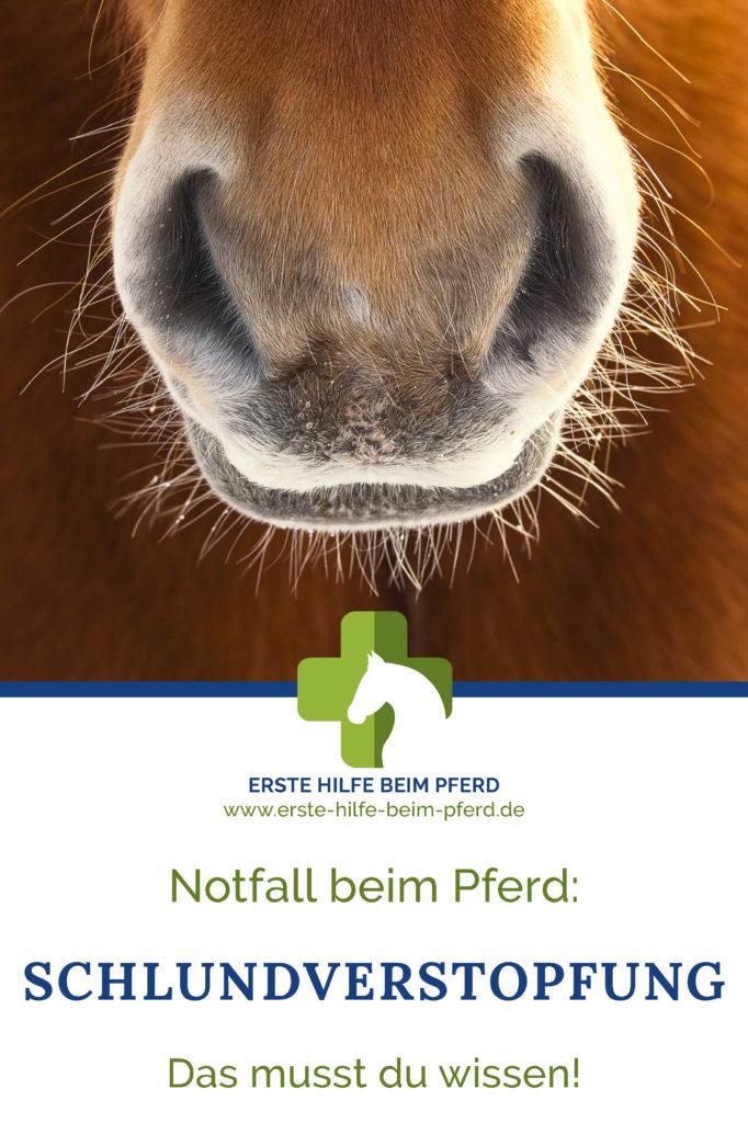 Schnelle Hilfe bei einer Schlundverstopfung beim Pferd!