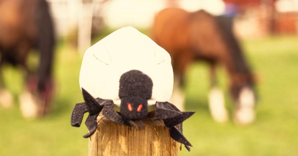 Borreliose beim Pferd