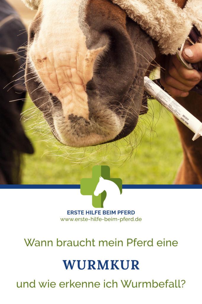 Pferd mit Würmern braucht Wurmkur