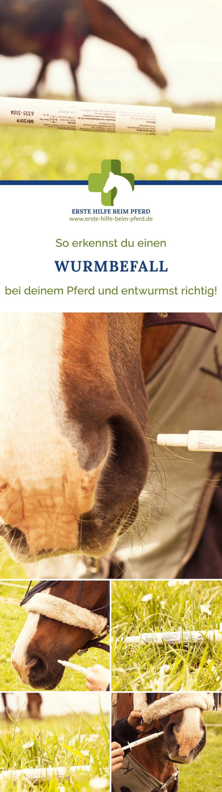 Wurmkur beim Pferd geben
