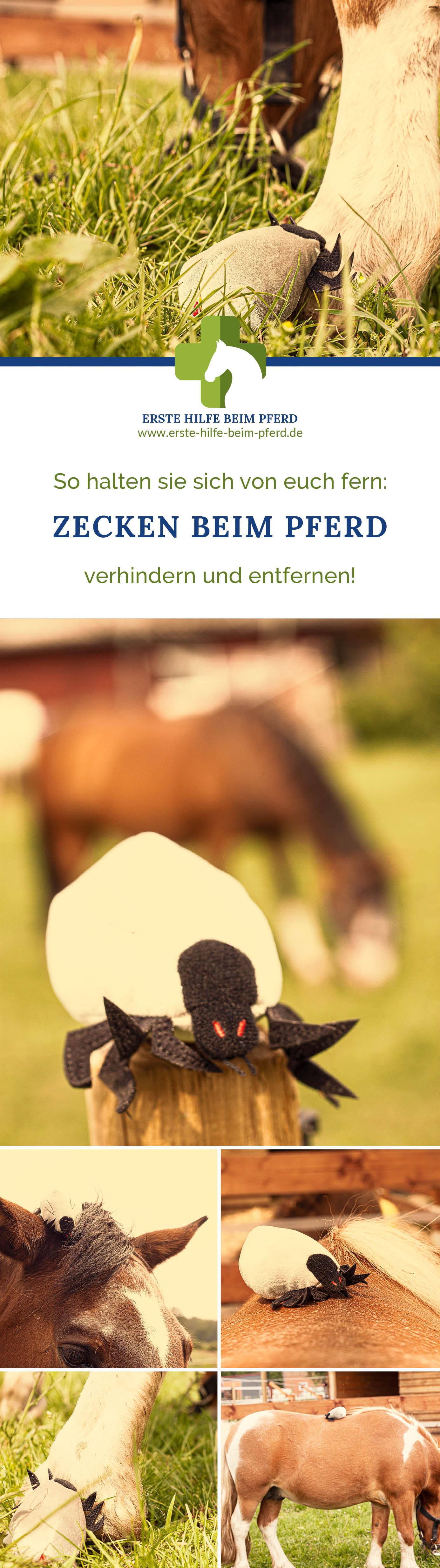Dein Pferd hat eine Zecke?
