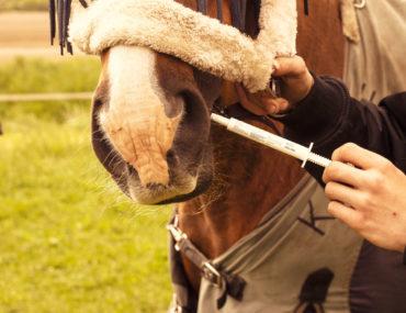Wurmkur für Pferde