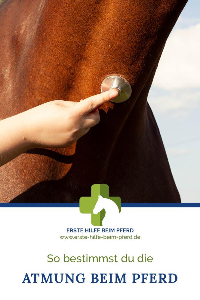 Atemzüge beim Pferd