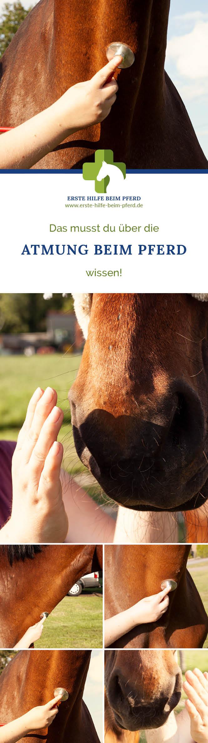Atmung beim Pferd