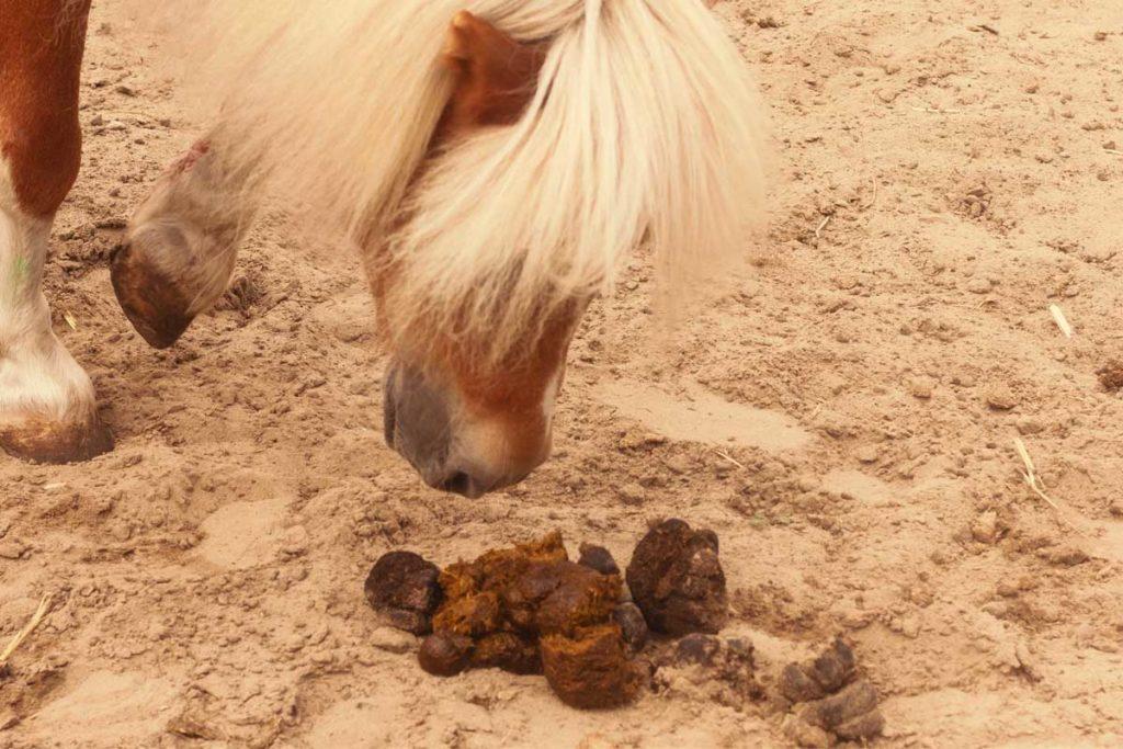 Pferdeäpfel