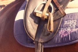 Pferd mit Druckstellen