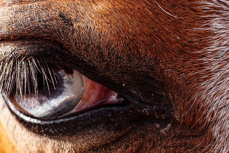 Periodische Augenentzündung
