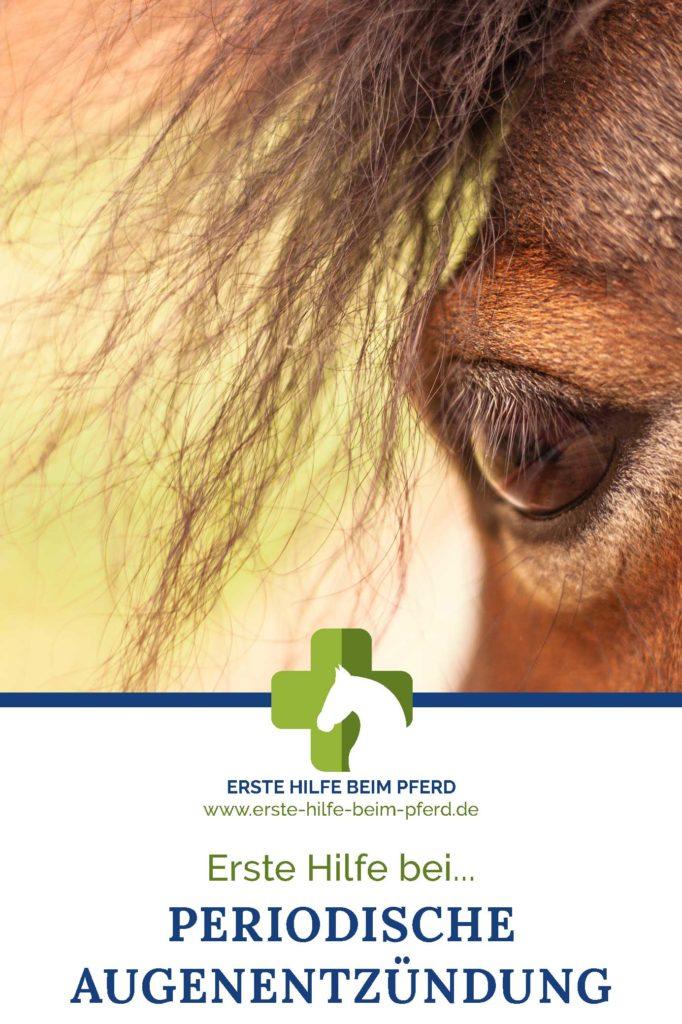Augenentzündung beim Pferd