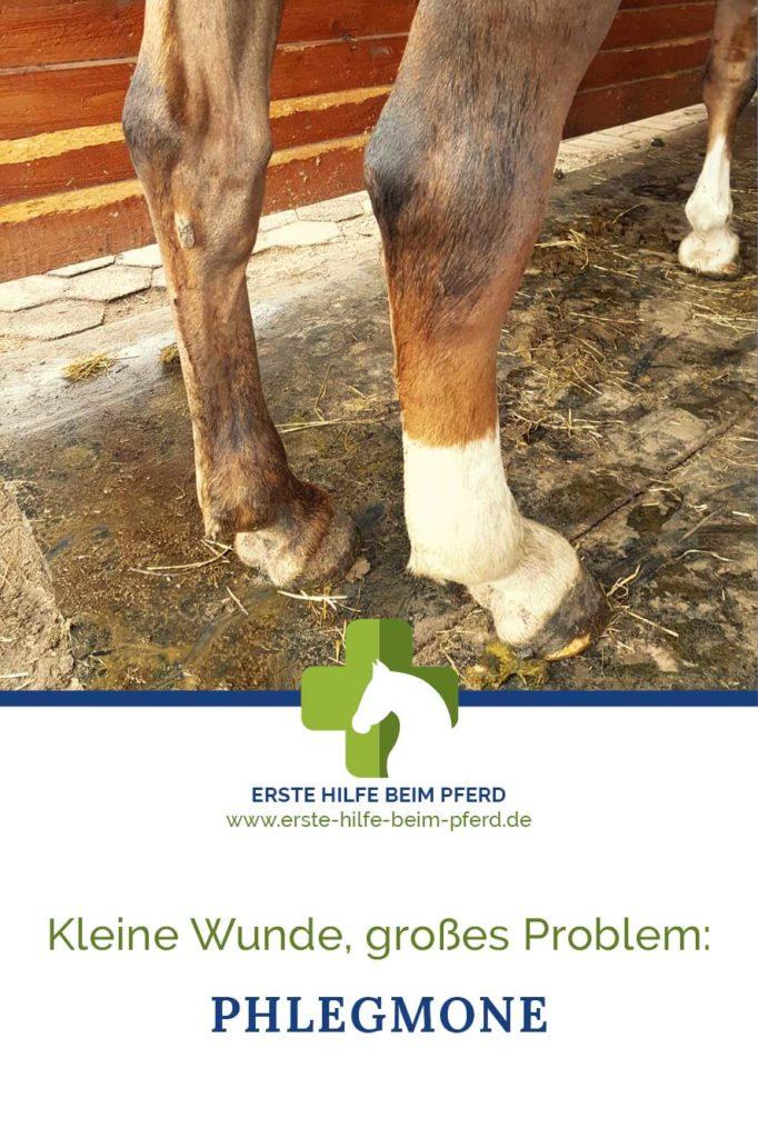 Phlegmone bei Pferden