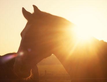 So hilfst du deinem Pferd wenn es kalt wird