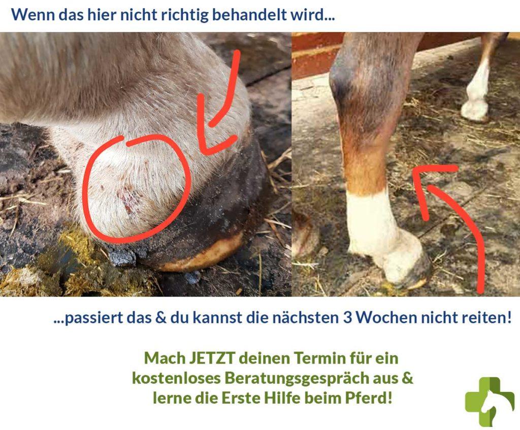Das passiert wenn Wunden beim Pferd nicht behandelt werden