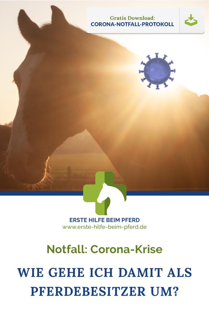 Pferd und Corona: wie geht das jetzt?