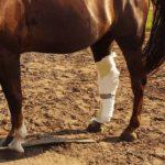 Verband beim Pferd