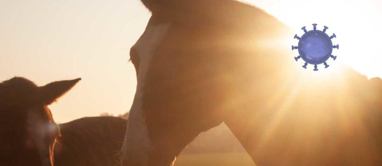 Corona-Virus: Pferd versorgen