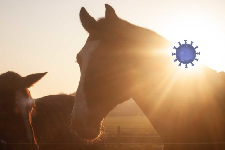 Corona-Virus: wie verhalte ich mich als Pferde-Besitzer?