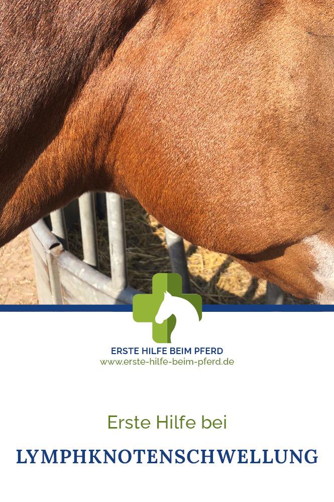 Lymphknotenschwellung beim Pferd
