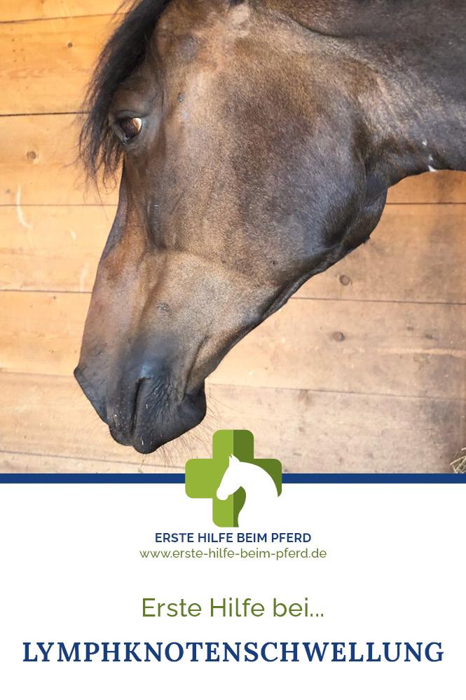Pferd mit Lymphknotenschwellung