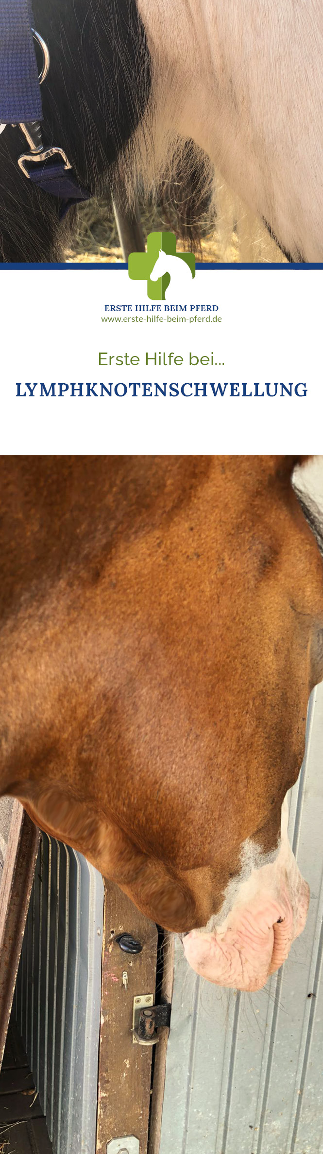 Pferd hat Lymphknotenschwellung