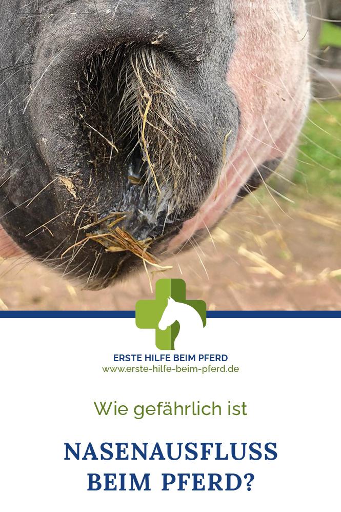 Ab wann wird Nasenausfluss beim Pferd gefährlich?