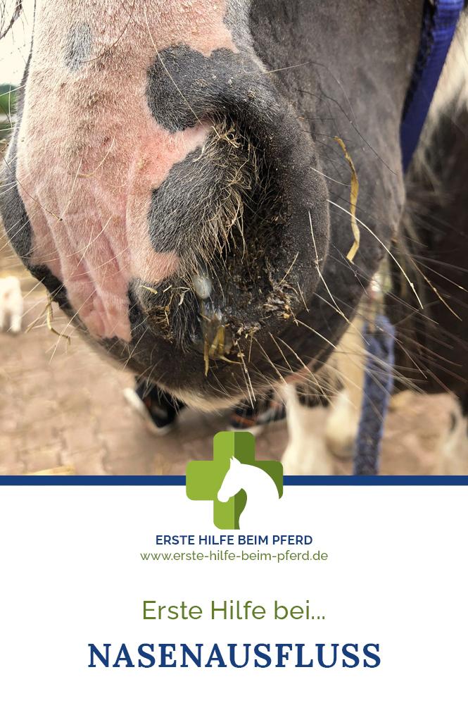 Erste Hilfe bei Nasenausfluss beim Pferd